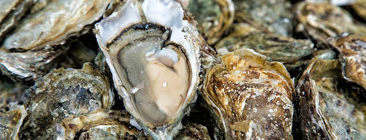 Des huîtres fraîches sont disposées devant nous. Une d'entre elles est ouverte.